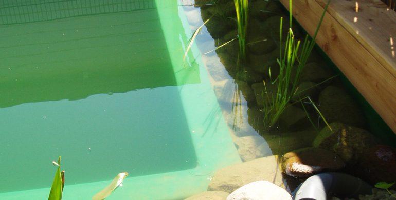 Schwimmteich in Lauff