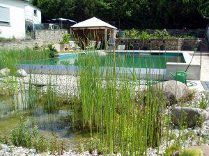 filterzonen-schwimmteich